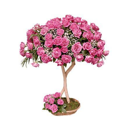 101 ruža san u ružičastom
